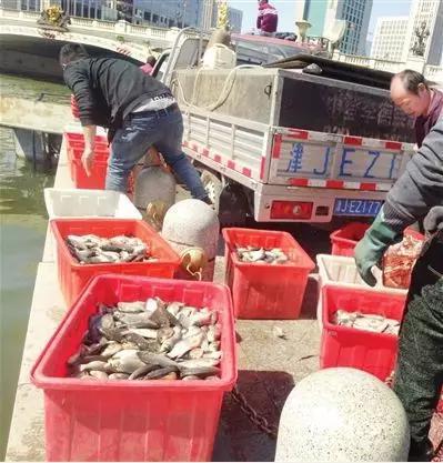 """做什么行业赚钱卖鱼、捞鱼、养鸽子……海河亲水平台啥时变""""水产市场""""了?"""