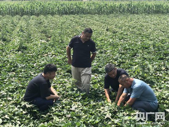 方海波(右二)在田间与农户交流(央广网记者 夏震宇 摄)
