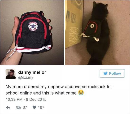 外国网友本来给侄子买的书包,寄过来一看,给自己家猫背上正合适。