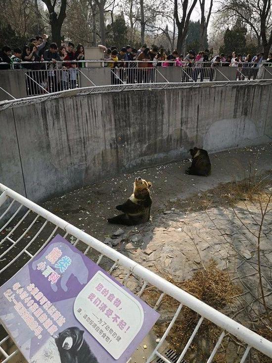 """动物园易患""""星期一综合征"""""""