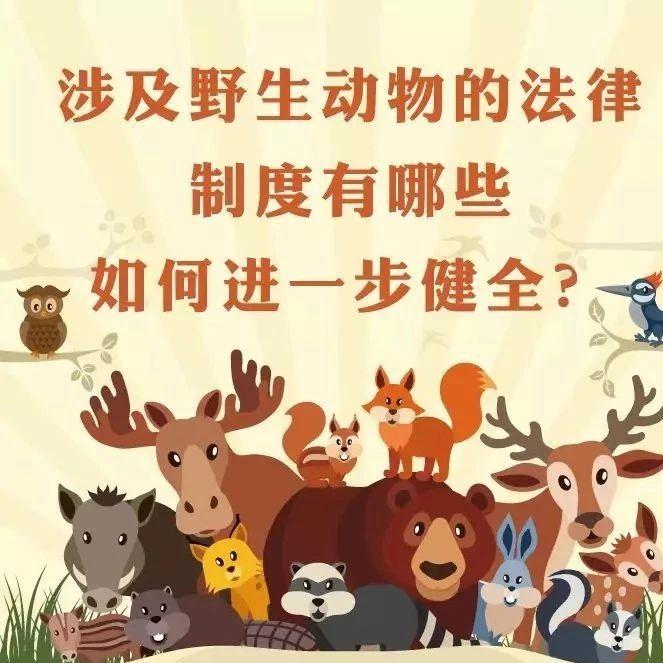 涉及野生动物的法律制度有哪些?如何进一步健全?