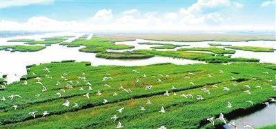 七里海原生态自然湿地风光