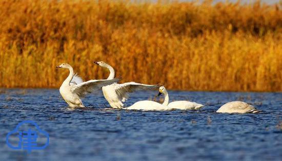 候鸟迁徙季来临!32万只候鸟飞临北大港湿地