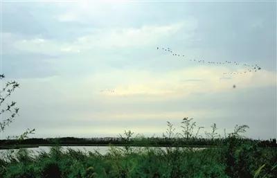秋季到来,宁河区七里海湿地自然保护区风光旖旎,美不胜收。本报记者 刘玉祥 摄