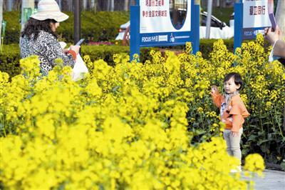 近日,中新天津生态城街路人驻足观看油菜花盛开,人与景融为一体,美不胜收。