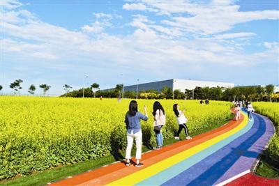 七彩花田的油菜花为空港铺上金色花毯,吸引市民前来赏玩。