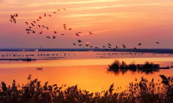 强化湿地整治修复