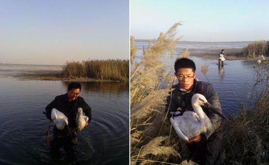 志愿者救助被投毒的东方白鹳(资料照片)