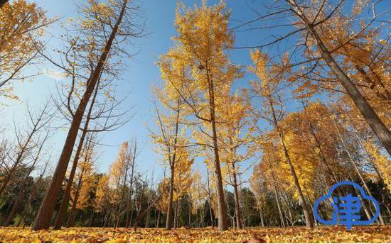 【津云镜头】瑟风万里动 正是秋景最美时