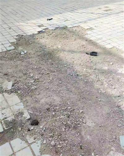 街区广场狗屎无人清理。
