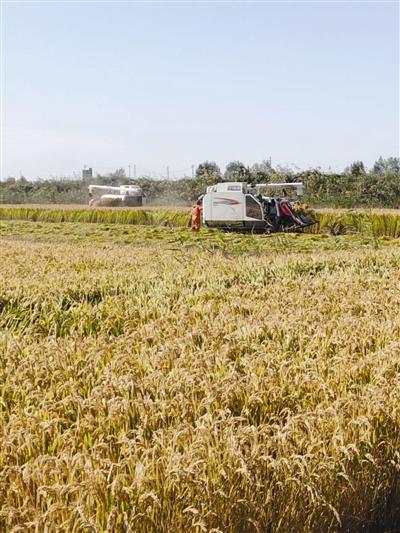 图片由东丽区农委、宁河区委宣传部提供