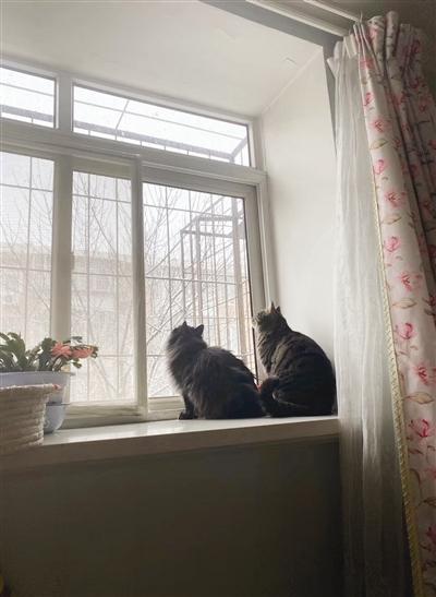 这个春节两只猫咪陪我的时间最多了。