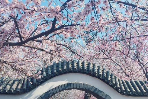 桃花堤撑起了整个春天的颜值