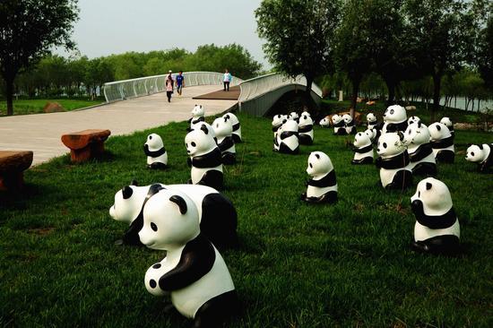 """""""熊猫""""群。"""