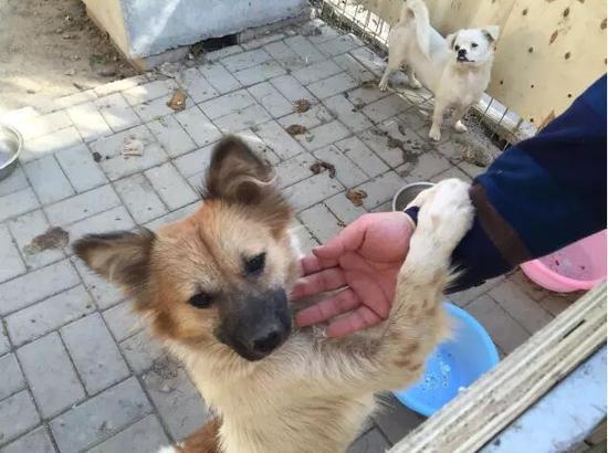 天津人对狗狗绝对是真爱 师大建流浪狗爱心园