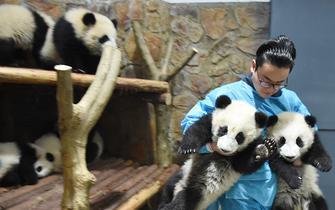 """天天跟熊猫腻在一起 这个""""奶爸""""成了网红"""