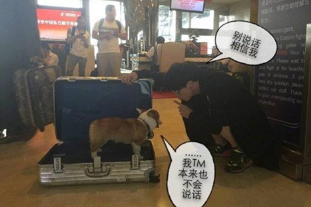 薛之谦出行把狗塞行李箱 当薛老板家的狗真不容易