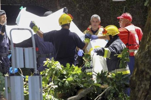 葡萄牙11人被巨树砸中丧生 事发时正举行宗教活动