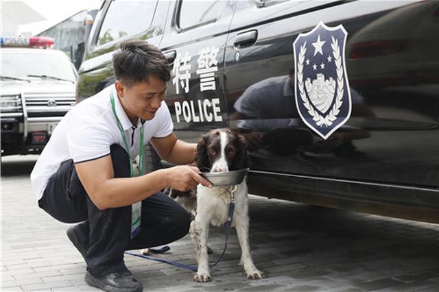 全运期间 100条警犬这样保护人们安全