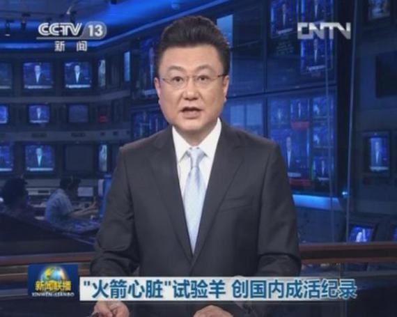 """2013年 中央电视台《新闻联播》报道""""火箭心""""试验羊创国内成活记录"""