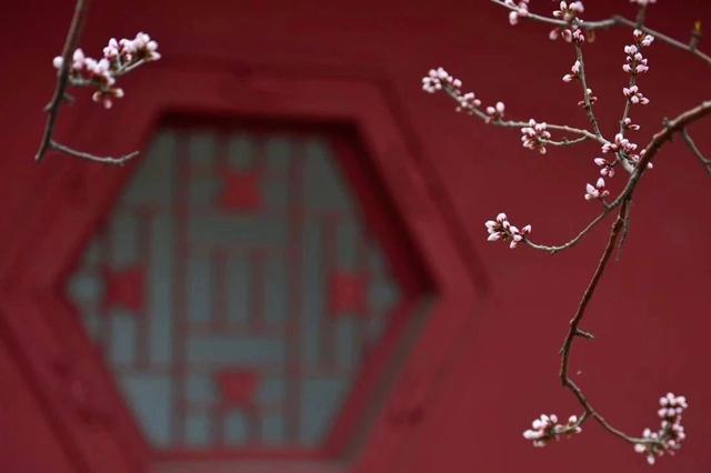 朋友圈被津城春光刷屏了 每一个人都是拍花大师