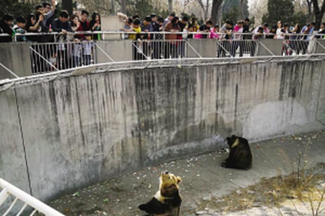 """动物""""周一综合征"""" 原来都是游客乱投喂惹的祸"""