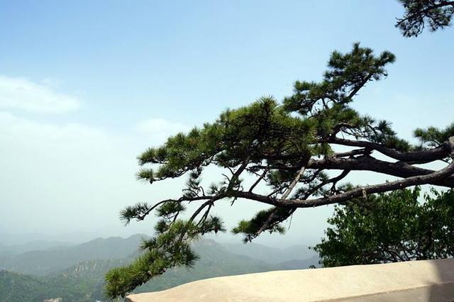 蓟州千棵古树等您来认养 认养一年600至800元