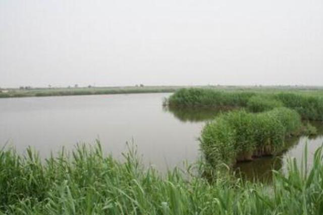 官方回复宁河110万亩芦苇将面临荒废退化问题