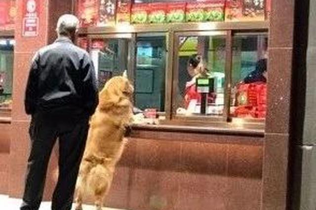 """狗不理?这只大金毛天天去""""狗不理""""要包子吃"""