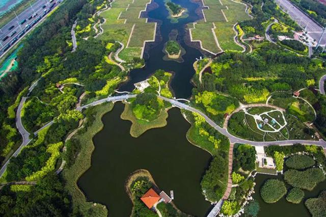 打造绿色森林屏障!5年后的津南将是座森林城