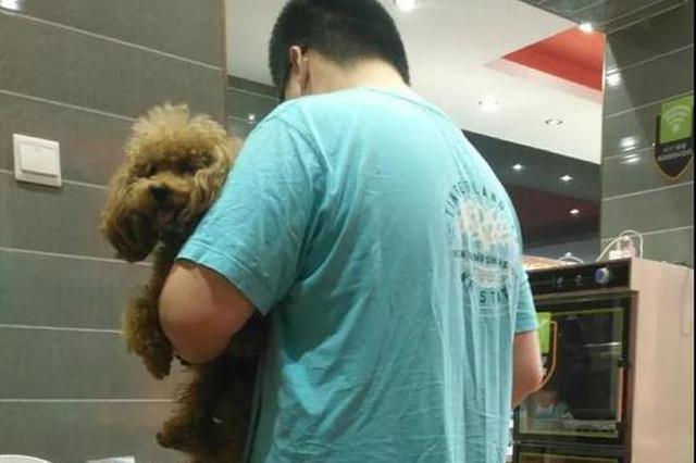 天津一男子带狗进餐厅 抱着狗去拿调料