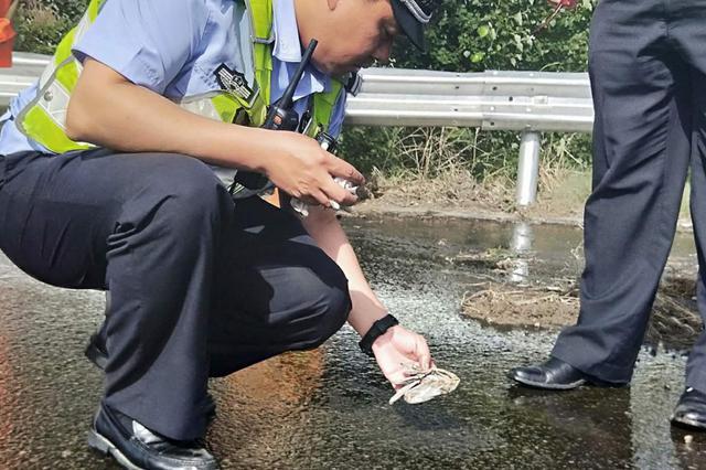"""天津这4起事故9车车损的""""罪魁祸首""""找着了"""
