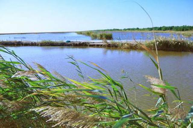 今年已累计调水6亿吨 天津三大水库水量充足保夏供