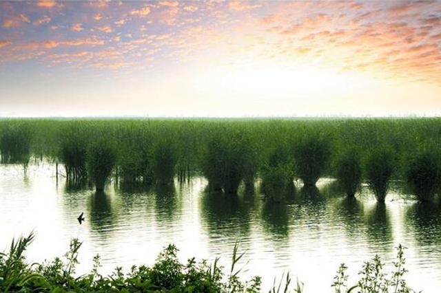 武清区大黄堡湿地环保曝光问题迅速整改