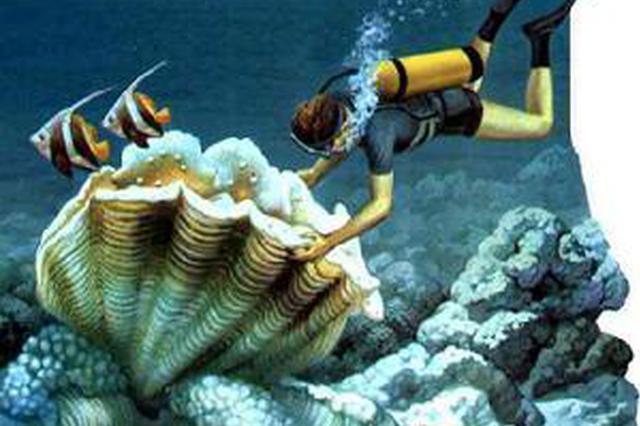 贝类吃完留作纪念有可能触犯法律