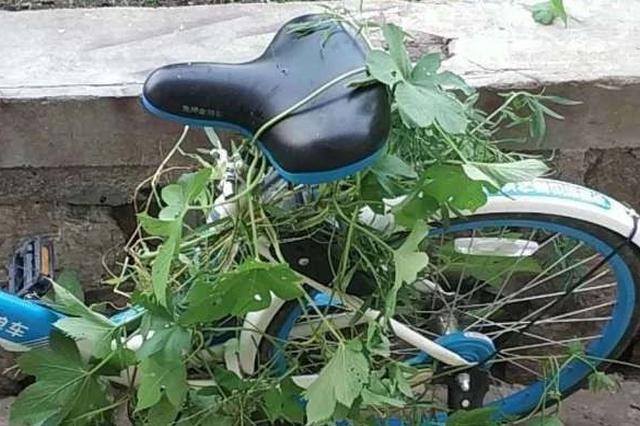 你赢了!为藏共享单车天津一网友这方法都用上了