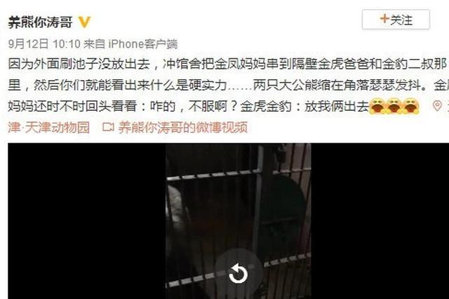 天津动物园有只暴脾气马熊 她吼一声熊大熊二都害怕