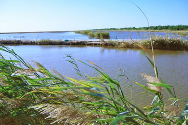 引滦向北大港水库调水全面启动 计划调水3-5亿立方米