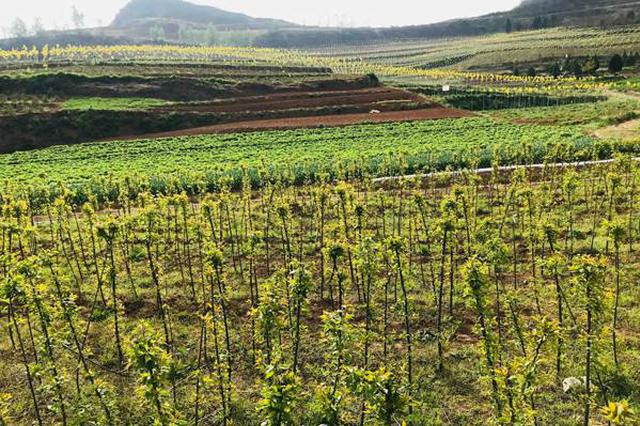 天津市打擊制售假劣林木種苗專項行動開展