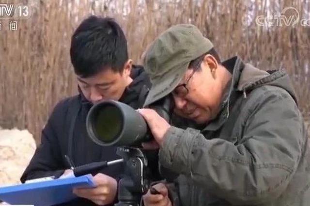 央视新闻频道《朝闻天下》报道:七里海湿地环境修复 大批候鸟