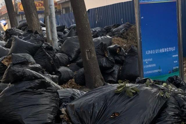天津一公交站被近100袋垃圾围了 原来是树叶