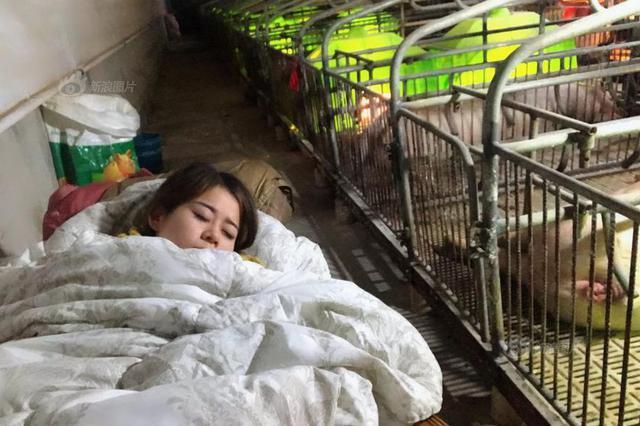 90后女孩年入百万与猪同寝 为猪做人工呼吸