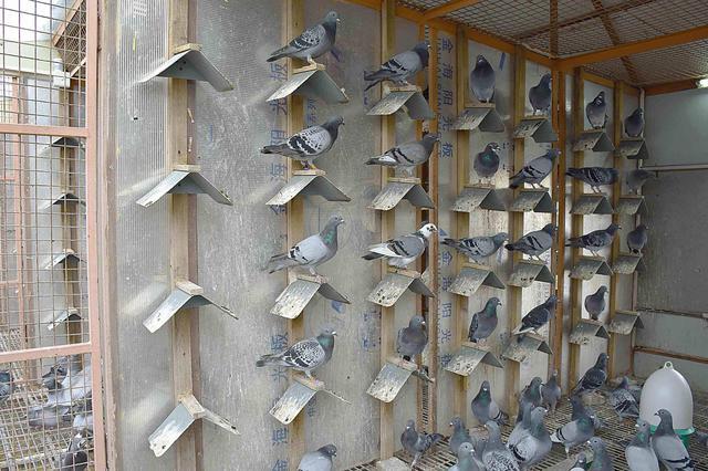 滨海新区这里拆除了8处违章搭建的鸽舍