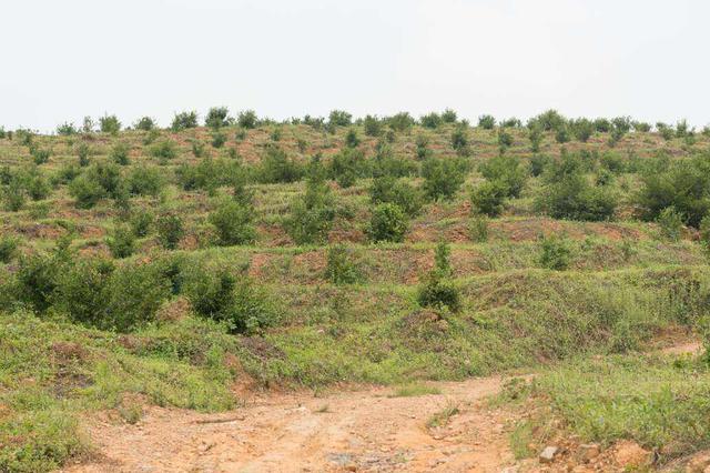 天津今年预计造林35万亩