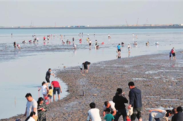 滨海新区八卦滩千人赶海拾贝 遗鸥家园生态系统遭破坏