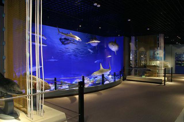 7日起国家海洋博物馆开馆时间提前半小时