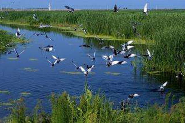 武清保护湿地拆除翠金湖