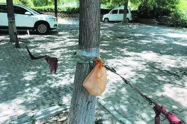 这处上海银行门前钢丝拴树圈车位 是否影响树木生长