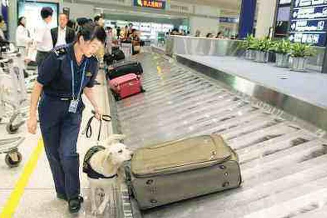 重要提醒!能自动跟你走的智能行李箱 不能登机