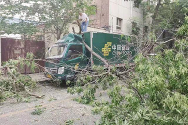 天津运输车撞断大树 未造成人员受伤